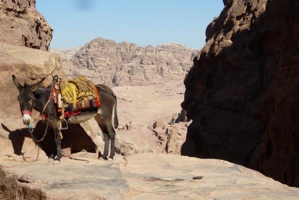 Ein Esel auf dem Berg in Petra
