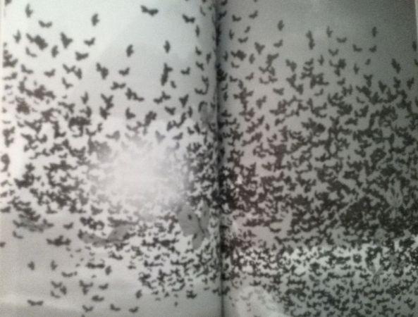 Schmetterlingsexplosion