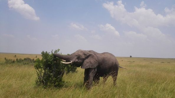 Safari Tour - Elefant