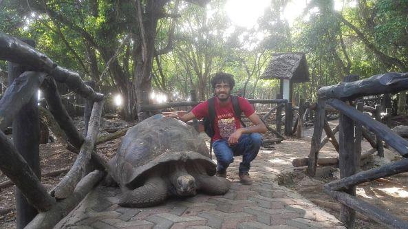 Aldabra-Riesenschildkröten