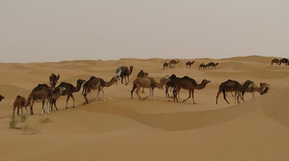 Wüste in Tunesien