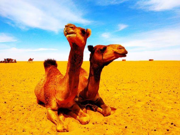 Es war eine Expedition in den Tschad